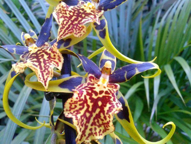 Orquídeas . várias