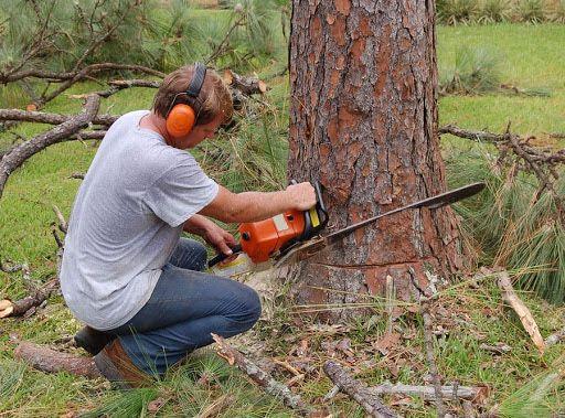 Спил кочевание деревьев Дерева,Планировка уборка Участка,Демонтаж