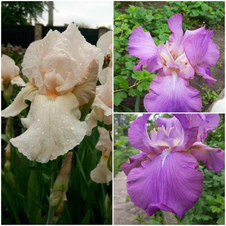 Квіти з власного саду