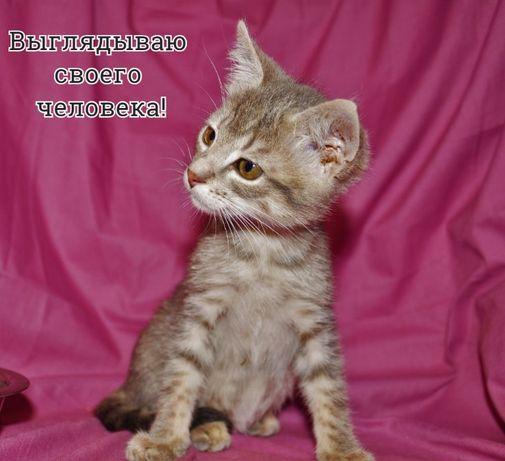 Серенький котенок - очаровашка Лялик, полосатый котик, 2 месяца