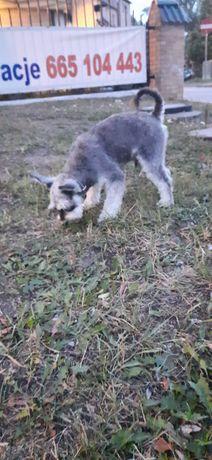 Znalezione pies widziany w port Mrzezyno o 21 34