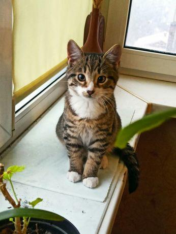 Котёнок 5 месяцев