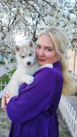 Puppy husky. Щенки хаски КСУ-FCI