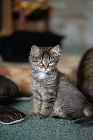 Жан - котенок для души