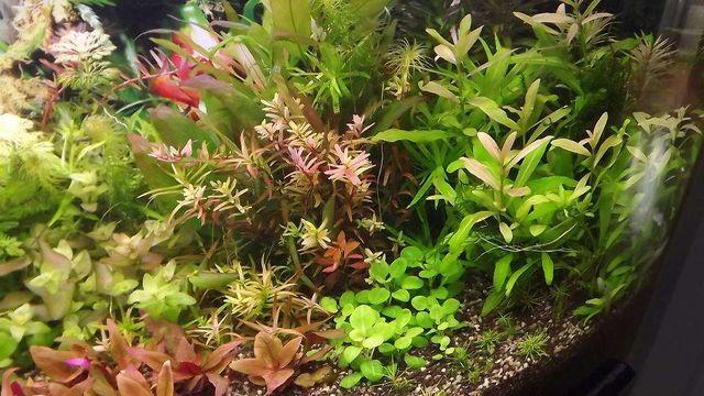 Rośliny do akwarium 140 szt 20 gatunków