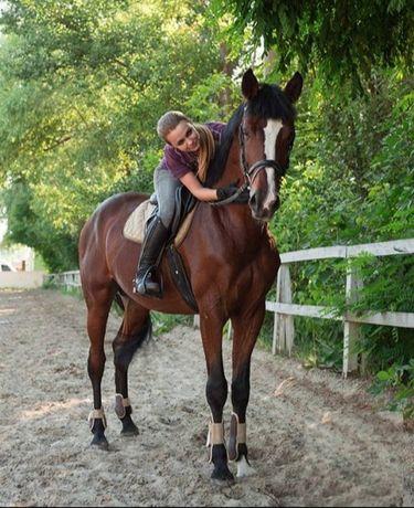 Верховая езда, конный спорт,  обучение.