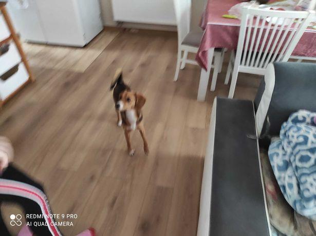 Oddam szczeniaka - psa w dobre ręce