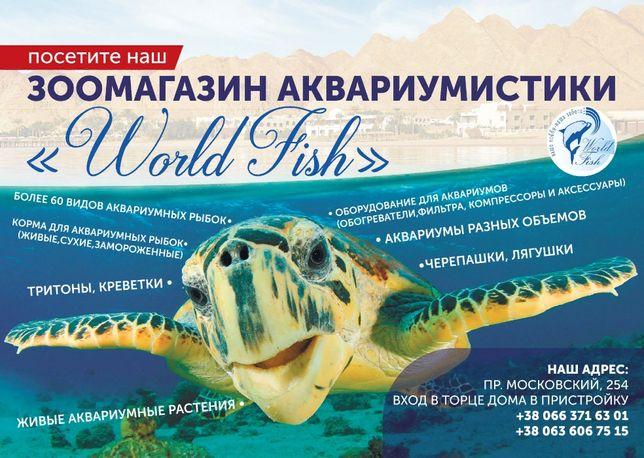 аквариумные рыбки,аквариумы в специализированном зоомагазине