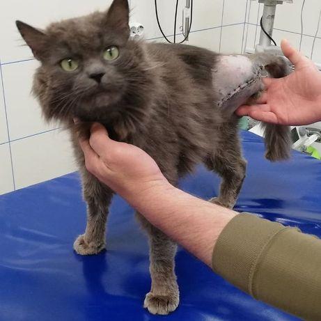 Особливий котик шукає дім!