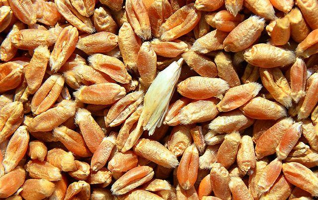 Пшениця 1,5 тони