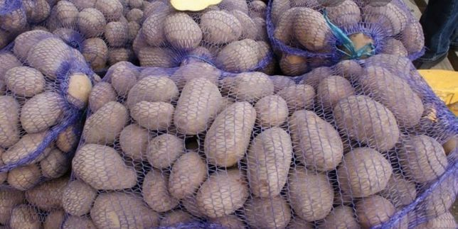Картопля Беллароза Микулинцы - изображение 1