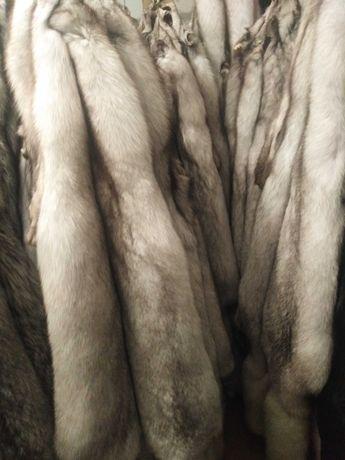 skóry z lisa niebieskiego