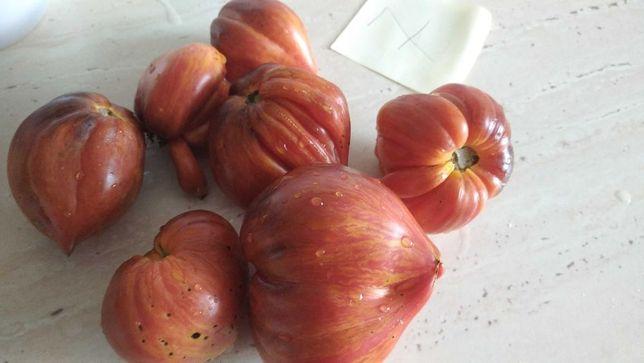 Pomidory kolorowe sadzonki