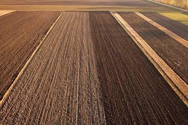 Wydzierżawię dzierżawa wynajem ziemia rolna Zielona Góra Krosno 573 ha