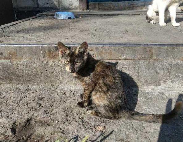 Отдам подросших  котят (кошки-мышеловы)