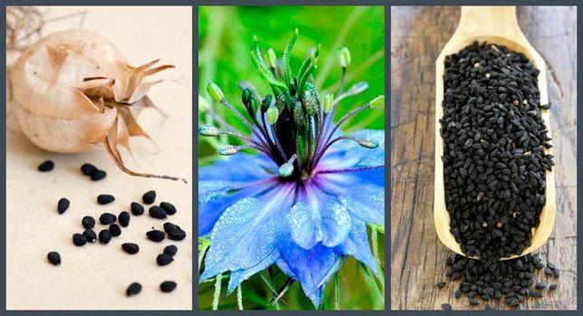 Масло черного тмина — состав, польза, применение