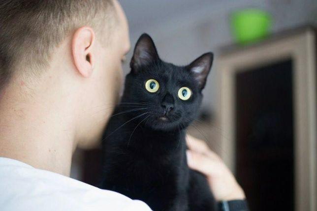 Отдам черную кошку, стерилизована ,1 год