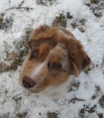 Psie przedszkole, szkolenie psów, posłuszeństwo