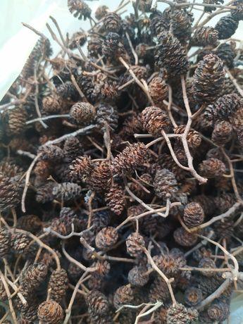 Szyszki czarnej olchy, suszona pokrzywa i liście orzecha włoskiego