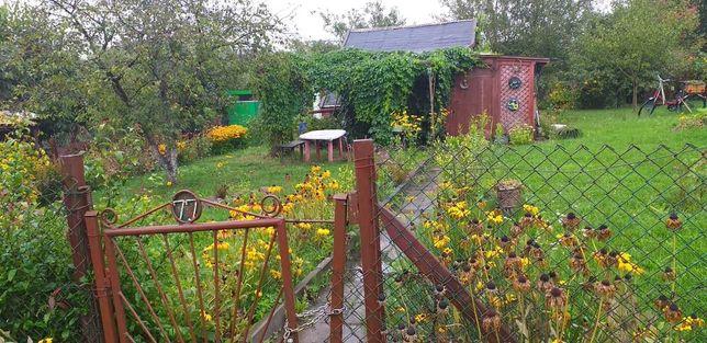 Dzialka ogrodowa w Kwidzynie ( Ogrod Akacja- przy ulicy Zielnej)
