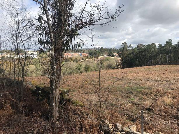 Vende-se bouça com plantação de carvalhos com 3 hectares