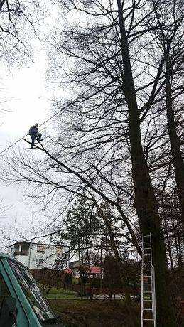 Wycinka drzew w zamian za drewno