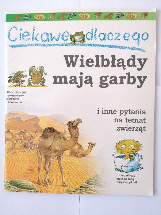 Ciekawe dlaczego wielbłądy mają garby Częstochowa - image 1