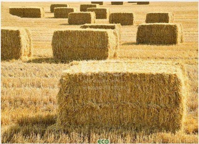 Тюки, солома пшенична в тюках