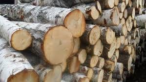 Drzewo- wałki drzewne