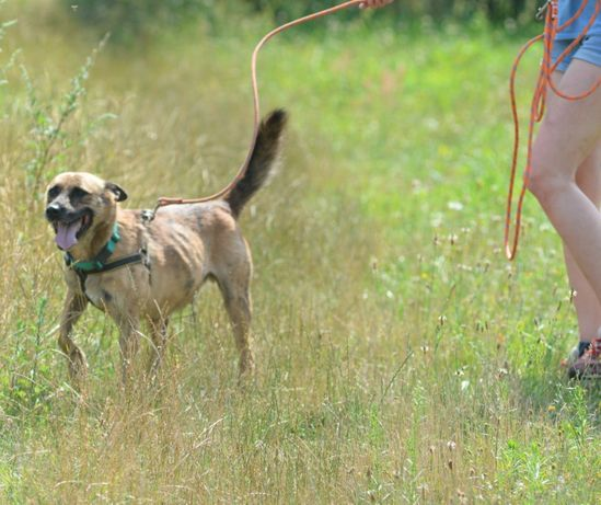 Drzekula ok.5 letni aktywny psiak Psy z Kociego Świata