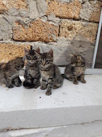 Котятки ищут любящее сердце .