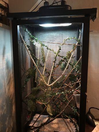 Terrarium dla kameleona i akcesoria