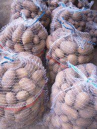 Ziemniaki jadalne Catania i inne