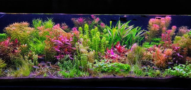 Rośliny akwariowe-zestaw 27 gatunków, ponad 160szt do akwarium 200l