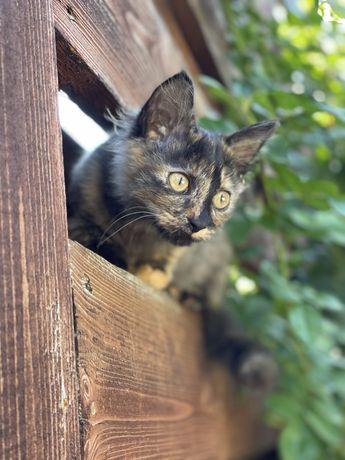 Котятки ишут семью