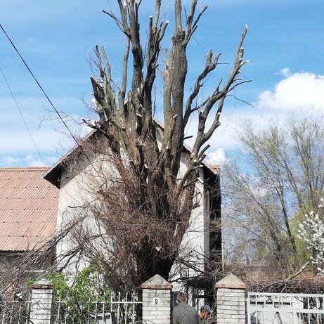 Спил деревьев, уборка участков, корчевание пней, покос травы,