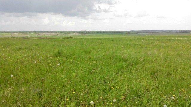 Продається земельна ділянка в с. Жовтневе