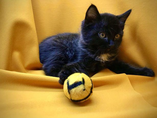 Котёнок - Аватарчик