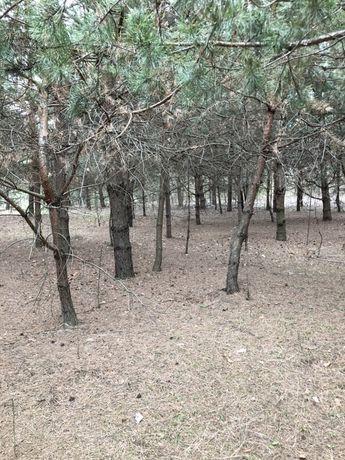 под строительство 0,75 га в лесу