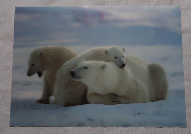 dwie podkładki trójwymiarowe, statek na morzu, niedźwiedzie polarne