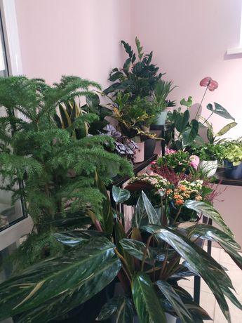 Горшечные растения по оптовым ценам