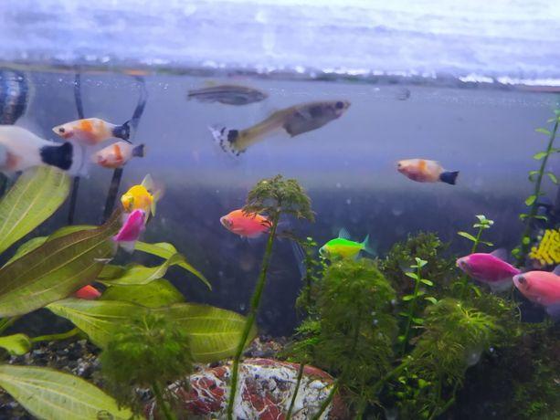 likwidacja rybki roślinki akcesoria
