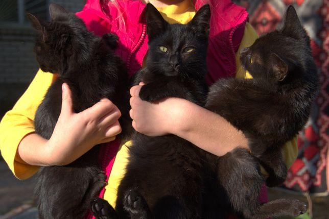 Чёрные котята -- порядок в доме.
