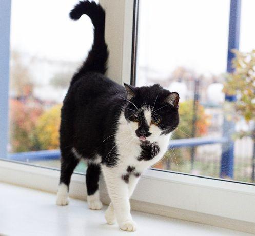Чорно-біла киця в добрі руки. Марфуша, 1.5 роки. Кішка, кіт в сім'ю