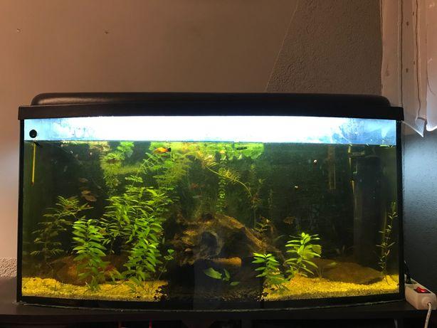 Akwarium używane 170l