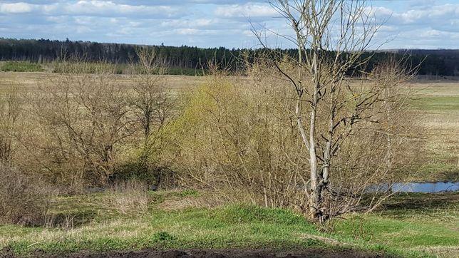 земля с. Самотоевка, Краснопольский район
