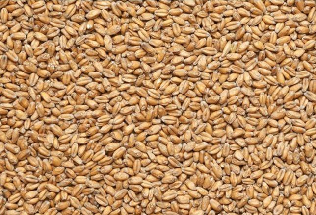 Пшениця, пшениці