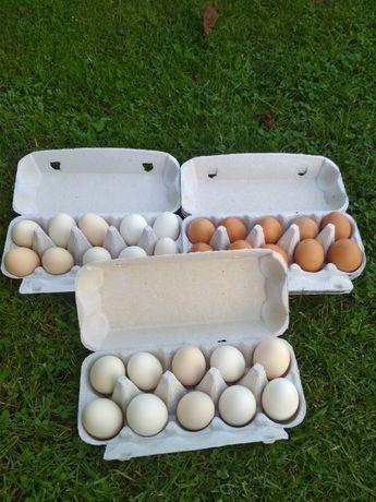 Świeże jaja kury wolny wybieg