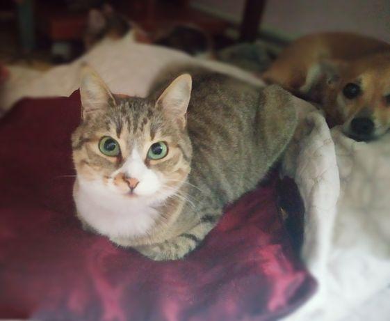 Кошка, молодая, сгусток энергии
