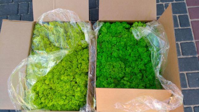 мох ягель, 500 грамм. Мох для декора/Стабілізований мох